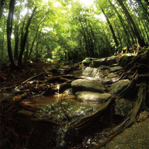 Yakushima -Water in the Forest- jacket